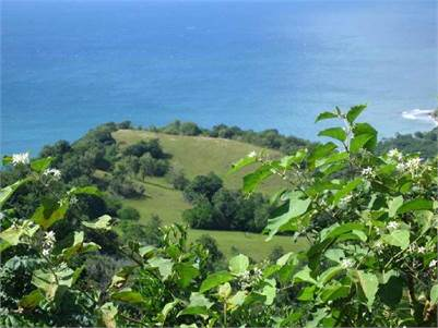 2 Lots for Sale in Laborie, LC - 13,031& 13,947 Sq. Ft.