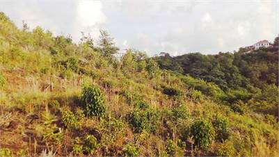 Adjoining Sea-View Lots For Sale at Beausejour Gros-Islet