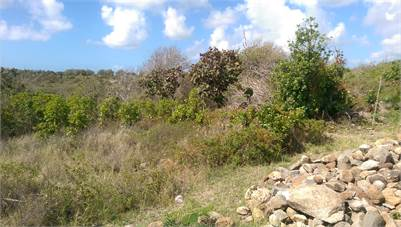 20,000 sq ft Land for Sale in Canelles Vieux-Fort