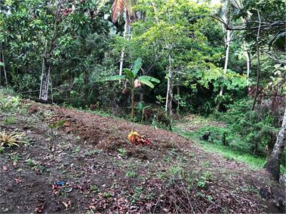 5 acres Agricultural Land For Sale in Micoud St Lucia - EC$100, 000.00