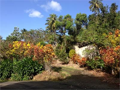 30 Acres of fertile Agricultural Land for Sale at Errad Estate in Dennery