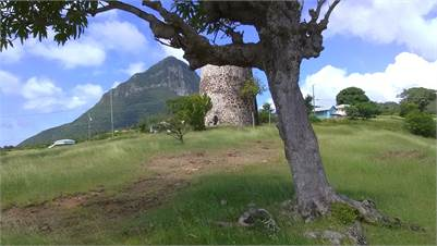 Land in Choiseul for Ec$9 per sq. ft.